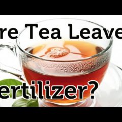 [Fertilizer] Are Tea Leaves Actually An Organic Garden Fertilizer Ingredient?