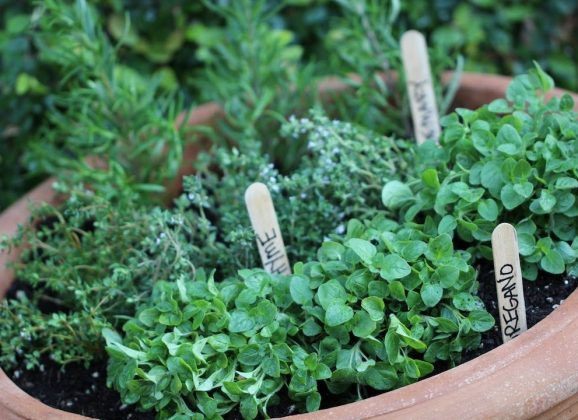 [Gardening] How To Start An Herb Garden For The Fresh Herb Taste