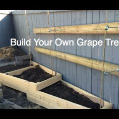 [Ideas] DIY How To Construct A Grape Garden Trellis On An Existing Fence